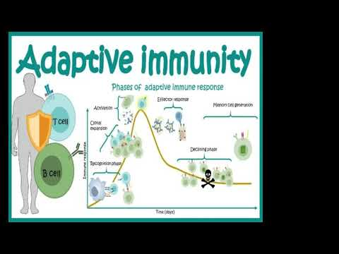 Embedded thumbnail for VITAMIN D IMMUNOLOGY